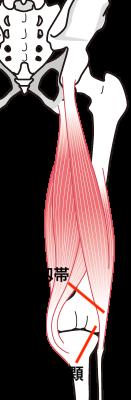 膝回りの画像