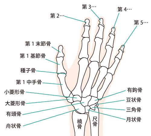 手首の痛みへの当院のアプローチは?
